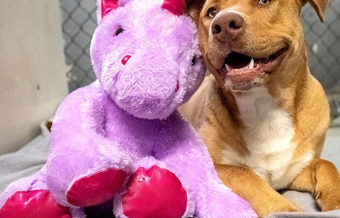 Stray Dog Gifted Unicorn After Consistently Trying To Steal It From Dollar Store